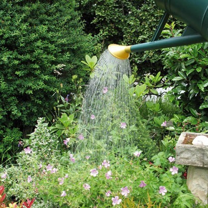 watering-can-roses